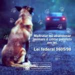 Prefeitura de PL avança na elaboração de Plano Municipal contra maus-tratos aos animais