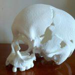 Prefeitura de PL estuda criar museu para preservar réplica do crânio de Luzia